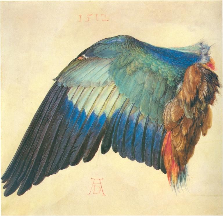 Albrecht Dürer,Wing of a European Roller, 1512. Watercolor on vellum, 7.7in ×7.9in (19.6cm ×20cm). The Albertina, Vienna.